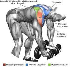 Bent Over Rear Delt Raise Muscle Activation Deltoid Workout, 7 Workout, Gym Workouts, Men's Health Fitness, Muscle Fitness, Mens Fitness, Gym Fitness, Bodybuilding Supplements, Bodybuilding Workouts