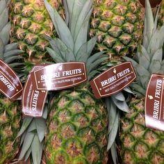 Piñas ,pineapples ,ananas de Costa Rica ,frutas tropicales ,fruits ,mercabarna ,piñasdecostarica, mercamadrid@bribrifruitscostarica #piñas #pineapple #pineapples #ananas #frutastropicales #dieta #nutricion #salud #costarica #caribe #puravida #instanfood #piñasdecostarica #fruterias #mercados #mercamadrid #mercabarna mercasevilla #spain #bribrifruits #disfrutadelapiña #piñasdecostarica #Fruitlogistica
