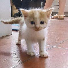 Follow, like and comment if you find this pet is adorable:) #cats #catsagram #catstagram #instagood #kitten #kitty #kittens #pets #animal  #petstagram #petsagram  #catsofinstagram #ilovemycat #instagramcats #catoftheday #lovecats #lovekittens #catlover #instacat  #dog #puppy #pup #dogsofinstagram #ilovemydog