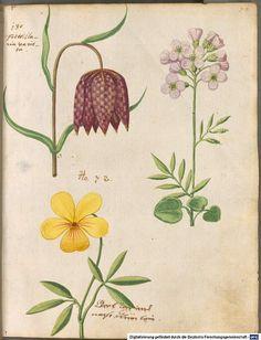 Hortulus Monheimensis - 1615