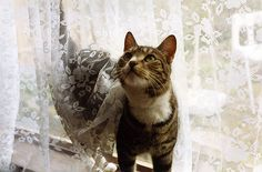 A cat in a window and lace curtains - images of homes past and present. Ap Art Concentration, Create Your Own Story, Christmas Past, Media Images, Old World Charm, Image Sharing, I Love Cats, Storyboard, My Best Friend