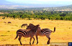 Hành trình khám phá đất nước Kenya