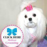 Maltese Pet Grooming | Dog Bows and Dog Bow Ties for Dogs | Doggybow
