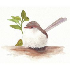 Wren Painting Bird Watercolor ORIGINAL Fairy Wren painting ❤ liked on Polyvore