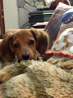 Dachshunds, Doggies, Thai Chi, Sausage Dogs, Weiner Dogs, Little Man, Four Legged, Best Friends, Kitty