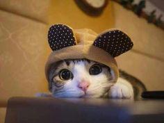 Cute but still Evil!!!