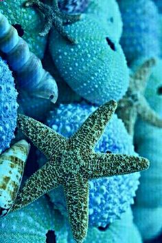 Sea star :) by ceca photo mer, marine life, sea creatures, ocean
