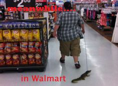 Meanwhile, in Wal-Mart...alligator on a leash with questionable owner #fun #brands