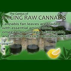 #CannaQ: Have you experienced the power of RAW #cannabis?  #OrderPotOnline #MMJ #JuicingRaw #MedicalMarijuana  #PotValet  #LosAngeles