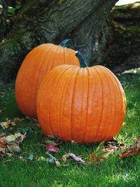 Mr. Wrinkles Pumpkin