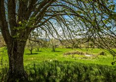 Photo Mrs. Spring by Pedro Quintela on 500px