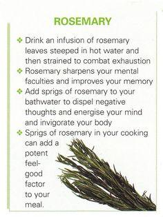 Rosmarinus Officinalis. Antioxidant, ↑mental concentration, mood enhancer…