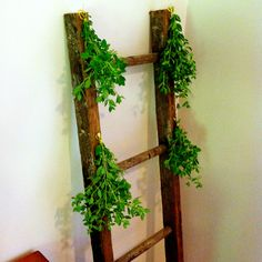 Drying oregano on an old ladder in our kitchen