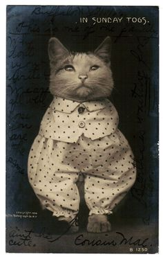"""Vintage CAT Postcard 1906 RPPC CAT Kitten Rotograph Real Photo """"In Sunday Togs"""" Adorable Cat Dressed In Unusual Outfit For Cat Lovers."""