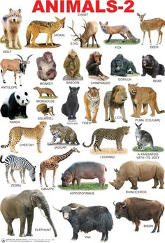 Animals 2 Chart Dreamland Animal 2 Chart Make Great First Chart