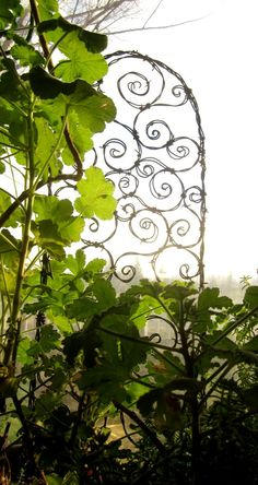 Barbed Wire Trellis
