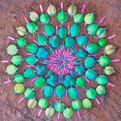 FOLLOW THIS LINK - so many pretty Mandalas made of flower petals