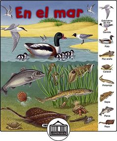 En el mar (Busca y aprende) de Susaeta Ediciones S A ✿ Libros infantiles y juveniles - (De 0 a 3 años) ✿