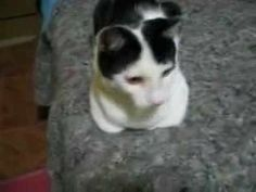 Sapeka o gato da Mitsy julho de  2009   YouTube
