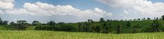 Balinees rijstvelden panorama