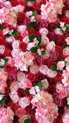 Roses pink flowers red flowers wallpaper I phone Samsung