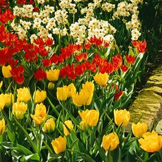 Brightly colored bulb varieties often look their best when planted near a white-flowering bulb.