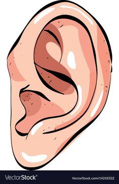 Cartoon image of human ear vector image on VectorStock Body Parts Preschool Activities, Five Senses Preschool, 5 Senses Activities, Kindergarten Activities, Five Senses Worksheet, Human Ear, Paisley Art, Book Background, Emoticons
