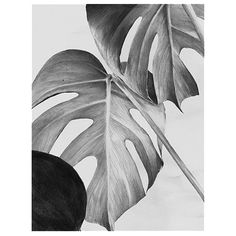 Monochrome Monstera Art Print 30 x 40cm ($31) ❤ liked on Polyvore featuring home, home decor and wall art