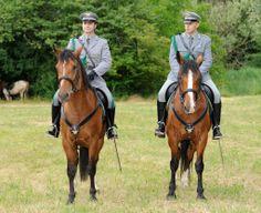 Fiera Cavallo del Ventasso Horse Breeds, Riding Helmets, Colours, Horses, Animals, Italia, Animales, Animaux, Horse