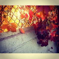 Autumn in Msc