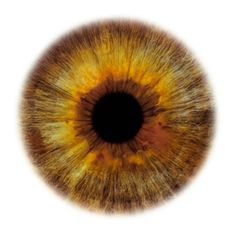 """Eyescapes"" is a series of photographs irises. It's a project by Rankin, London-based photographer and co-founder of the magazine Dazed & Confused."