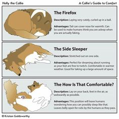 A Collie's Guide To Comfort - from Holly the Collie.  She does such great Collie depictions. :)