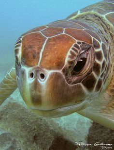 Green sea turtle. :)