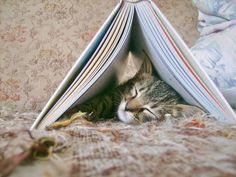 cat in book