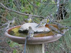 diy bird bath, site with good tips on where to put it in yard so that it is bird friendly!