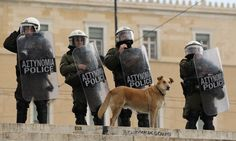 Loukanikos, the valiant dog who faced down Greek riot police during the height of the eurozone crisis, has died