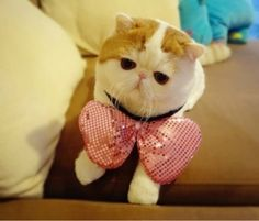wearing things his way. | 43 Fashionable Looks Worn By Snoopy The Cat.  SOOO FREAKIN CUTE!