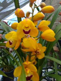 Exotic Plants, Yellow Flowers, Orchids, Goodies, Garden, Modern, Beautiful, Roof Tiles, Flowers