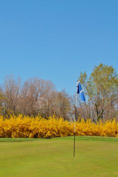 Flowers on the Golf Course. Golf Club Udine - Fagagna, Italy