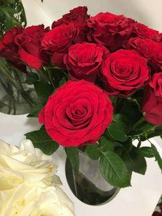 Love Rose, Tea Roses, Beautiful Flowers, Plants, Roses, Beauty, Flowers, Plant, Rose Tea
