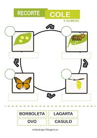 Notebook da Profª: Ciclo de vida da Borboleta