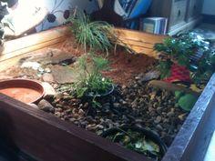 My indoor tortoise table