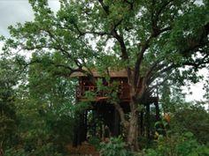 "See the forest for the trees ""Tree House Hideaway Village Ketkiya, Bandhavgarh, Dist Umaria. Madhya Pradesh, India"""