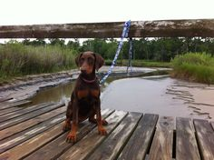 Baby Morgan at Pine Gully Park in Seabrook