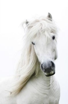 White Horse | Color Desire White | Rosamaria G Frangini