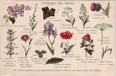 language of flowers