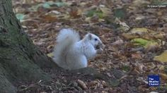 This Squirrel Is One In A Million