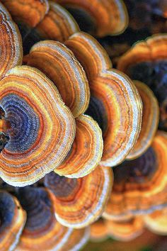Texture and Pattern: Turkey Tail Fungi Natural Forms, Natural Wonders, Patterns In Nature, Textures Patterns, Nature Pattern, Organic Patterns, Fotografia Macro, Mushroom Fungi, Turkey Tail Mushroom