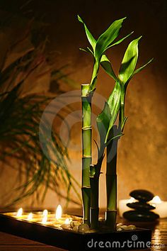 Bamboo plants and candles