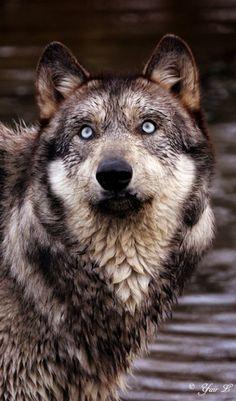 castlesofsnow:  is it a bird is it a plane…? by *wolveskeeper